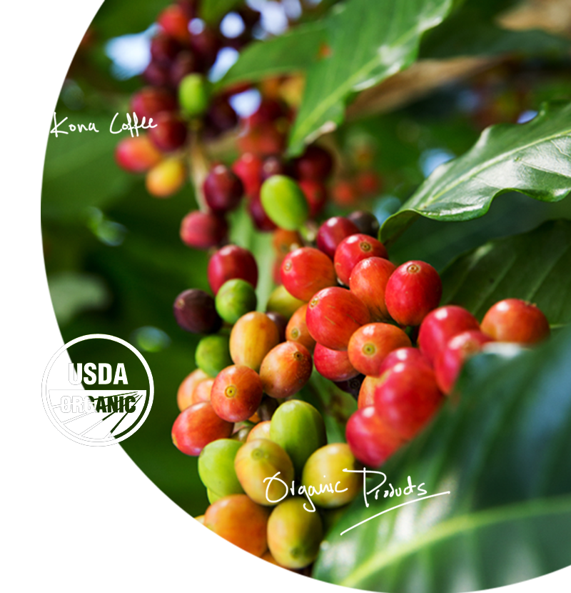 pure organic Kona coffee